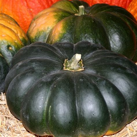 special courge
