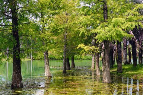 The Best Trees for Waterlogged Soil