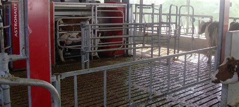 Automatic gates - no repression of low-ranking cows - Lely