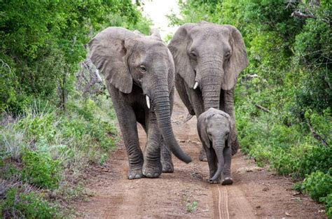 Thula Thula Game Reserve - South Africa Nature Reserves
