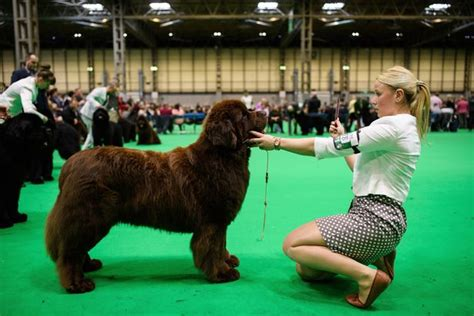 Crufts 2018 Best in Show final - results plus all the