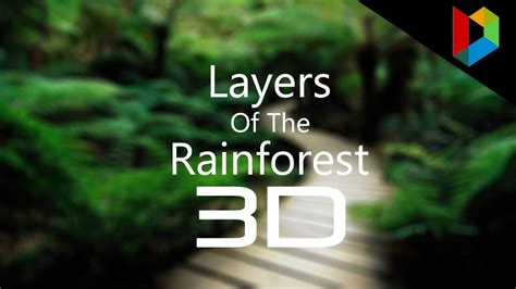 Layers of the rainforest 3D (Fixed Quiz) - YouTube