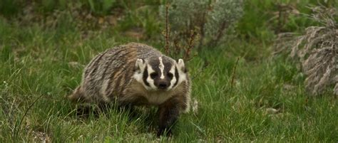 Wisconsin Chapter: About   THE WILDLIFE SOCIETY