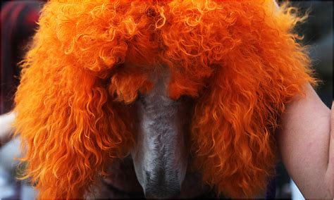 Dogs Become Living Sculpture at Show for Groomers - The